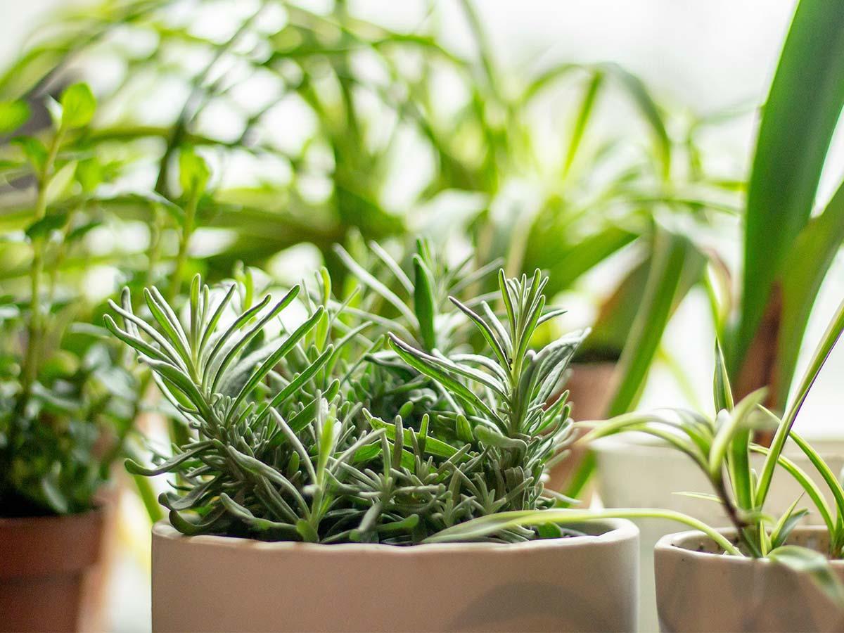 Horta de ervas em casa