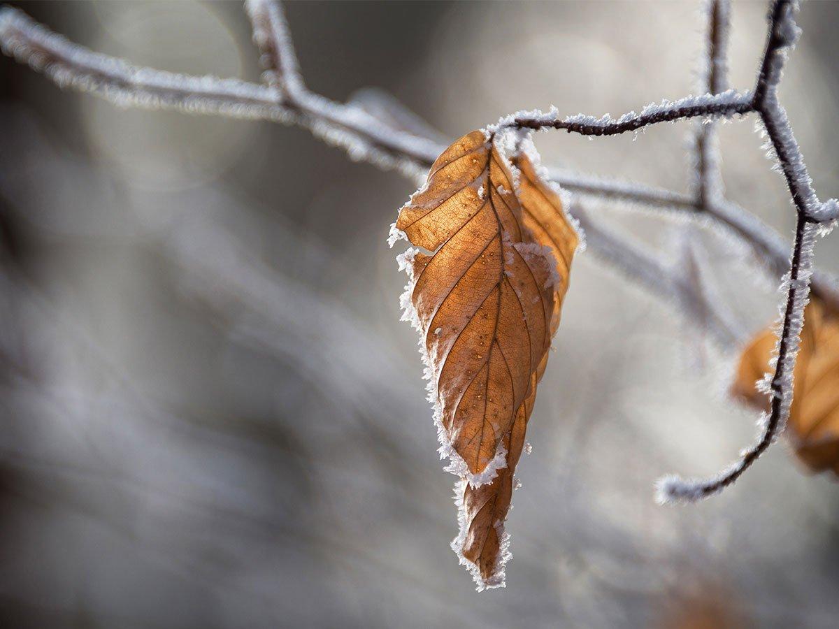 O Inverno está chegando