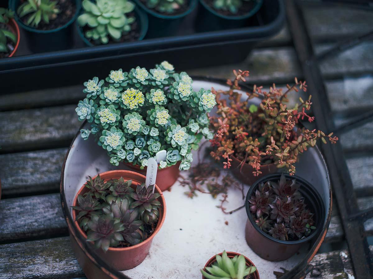 Plantas são uma ótima companhia