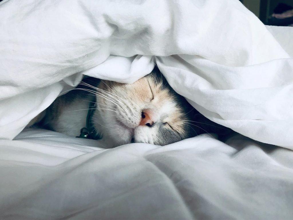 Caminhos para uma boa noite de sono
