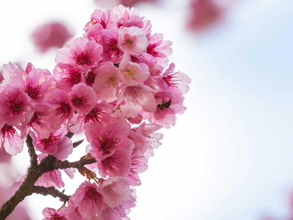 Primavera na Medicina Tradicional Chinesa